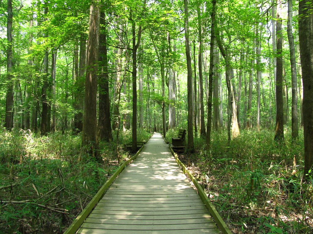 Lower Boardwalk Trail Congaree National Park 21 Flickr