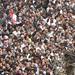 Syria Damascus Douma Protests 2011 - 10