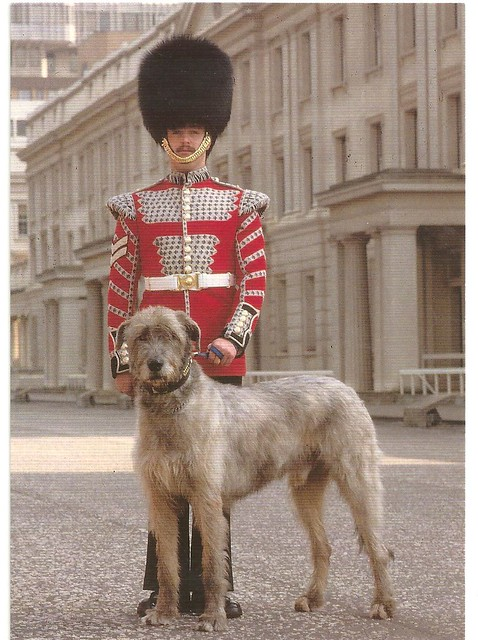 Irish Guards Drummer With Their Mascot Flickr Photo