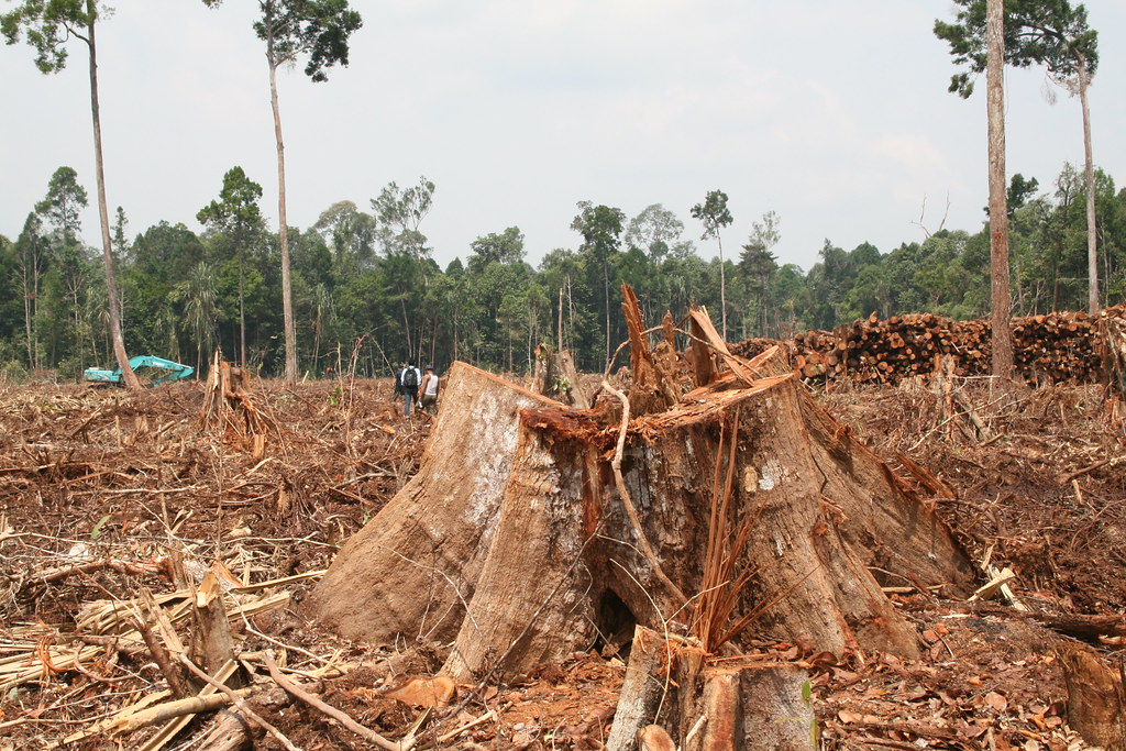 deforestation of our rainforests National geographic says that at the current rate of deforestation, the world's rainforests could diminish and virtually vanish within the next 100 years at our current rate of depletion this.