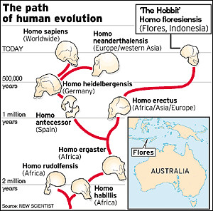 evolution of the genus homo the modern synthesis Evolutionary biology exam 1  in the 1930s and 1940s the modern evolutionary synthesis occurred  which genera is likely the most recent ancestor of the genus homo.
