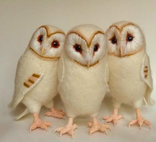 three more baby barn owls | Flickr - Photo Sharing!