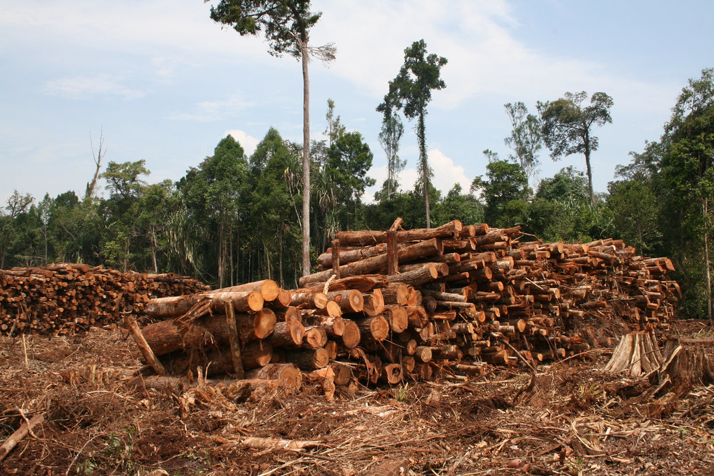 the destruction of the rain forests Tropical rainforest destruction as a result of its high demand, tropical hardwoods are being extracted from the rain forests at an unsustainable rate.