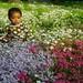 o-flowers1