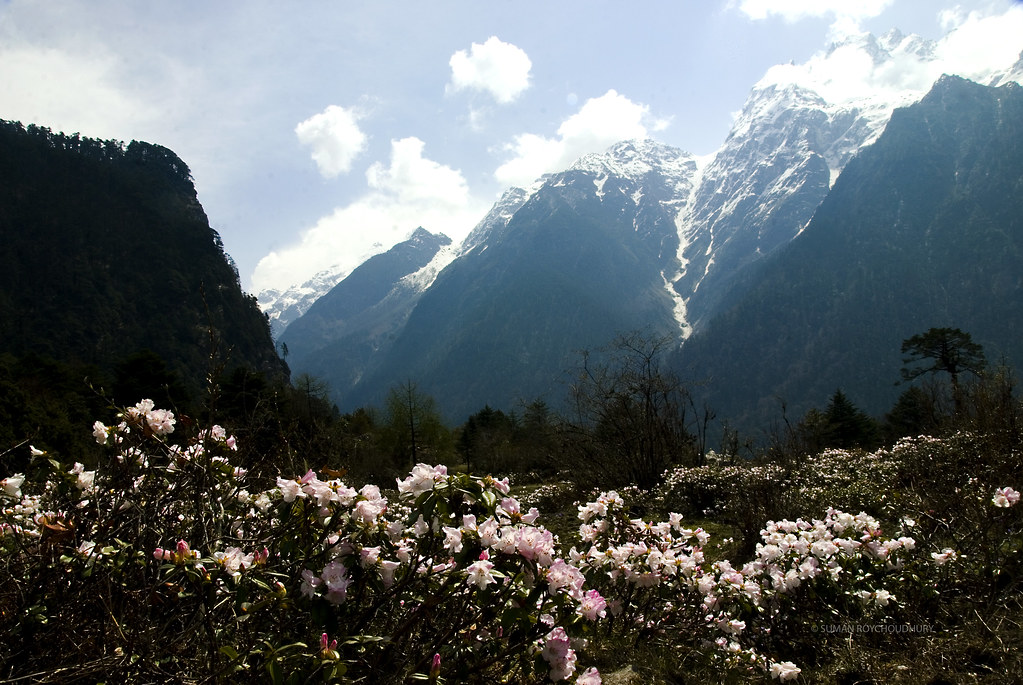Valley Of Flowers Yumthang North SikkimIndia Suman