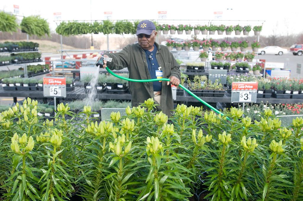 Walmart Associate Waters Plants In The Garden Center Flickr