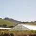 cassin ranch • watsonville, california