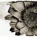 Black Grunge Flower