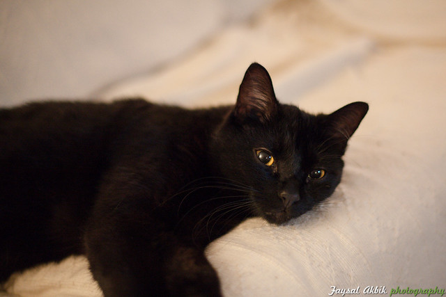 Black Cat with Yellow Eyes | No Caption. | By: Faysal ...