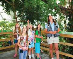A group of Girl Scouts search for birds in the Upland Tropical Rainforest