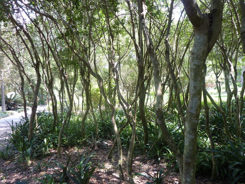Bok Gardens To Daytona Beach