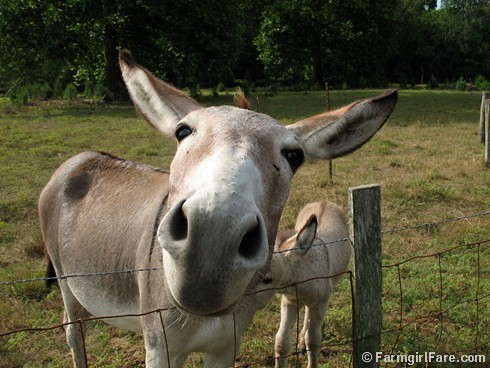 The Daily Donkey 132 | by Farmgirl Susan