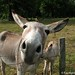 The Daily Donkey 132