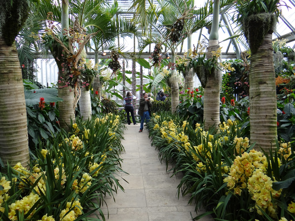 chicago botanic garden orchid show 2018 28 images  : 14171094757c3c700608eb from americanhomesforsale.us size 1024 x 768 jpeg 385kB