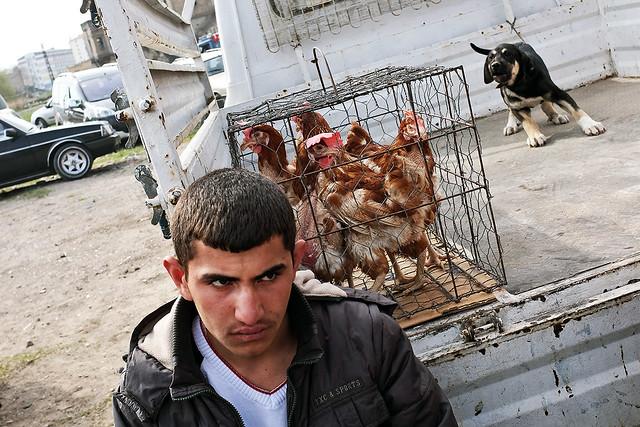 Kuş pazarı- Kayseri