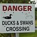 DANGER DUCKS & SWANS CROSSING