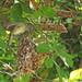 unusual bird nest design... mother feeding young