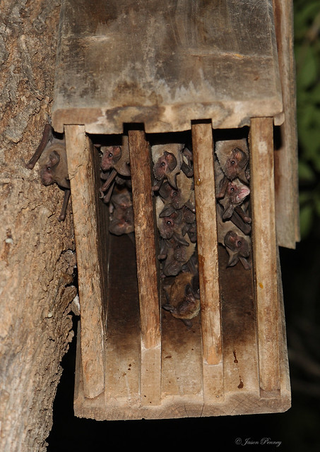 My Bat house runneth over.. | Flickr - Photo Sharing!