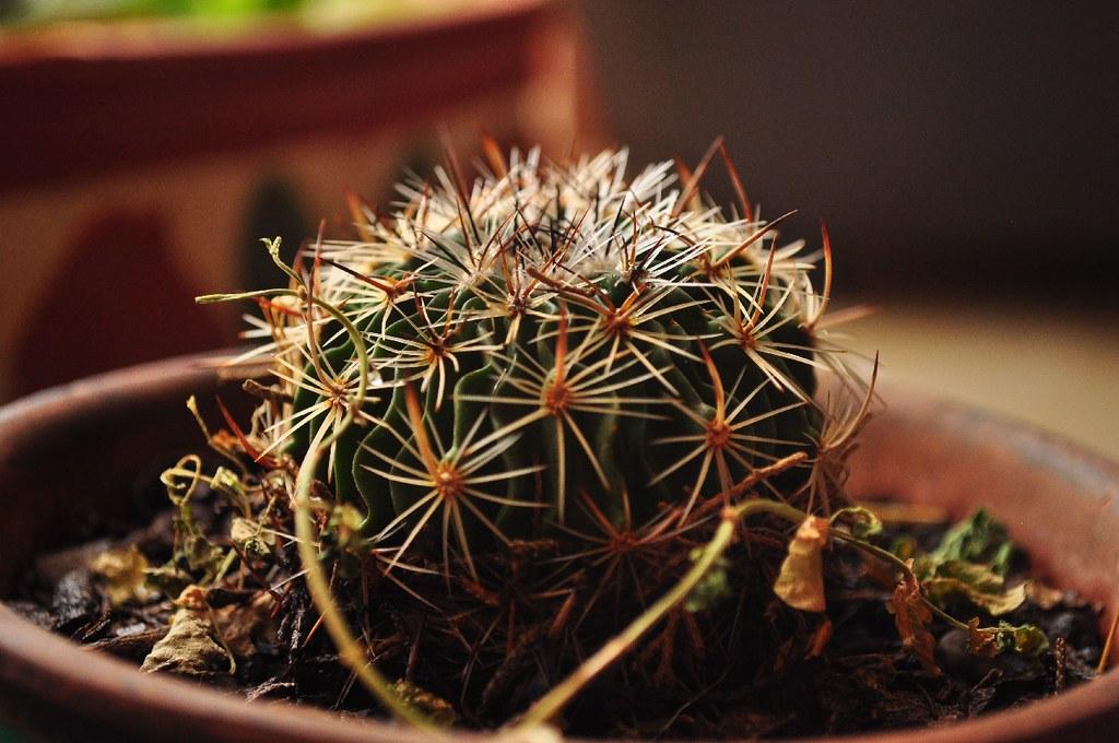Cactus up antonio garamendi flickr for Cactus cuidados interior