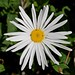 Lovely Flower (1000 favorites)
