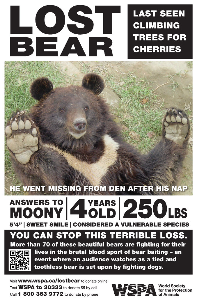 Ic Animal Tarot Cards: WSPA Summer Poster Campaign - Bear