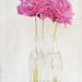 textured Pink Peonies
