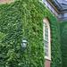 Ivy at Harvard