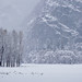 Snow and mist in Ahwahnee Meadow, Yosemite National Park