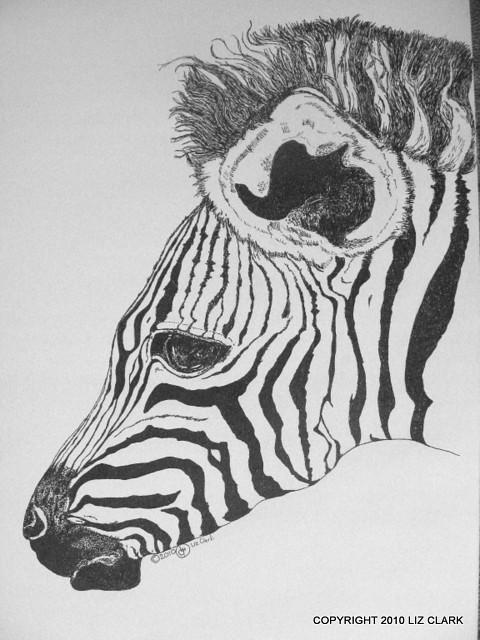 Zebra Foal - Pen & Ink Drawing | I had a lot of fun doing ...