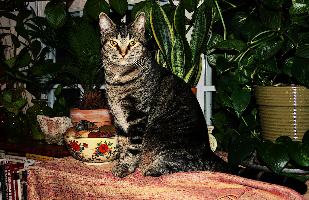 King George Of The Jungle Here S My Bossy Cat George