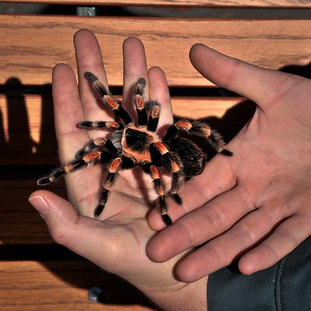 Are tarantulas poisonous yahoo dating 7