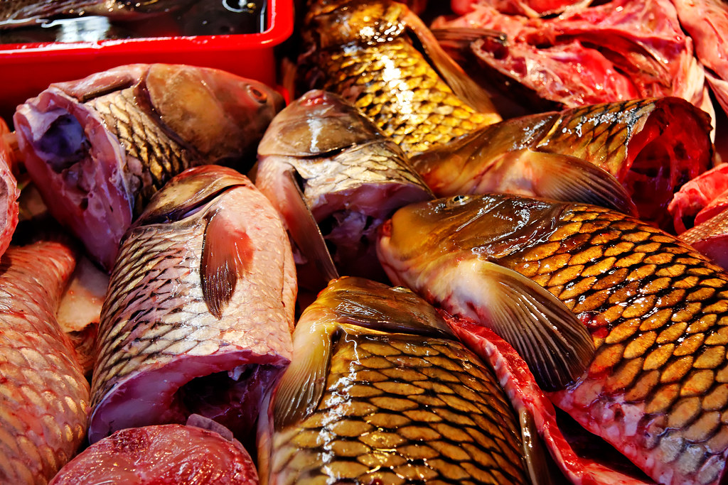 Carp in Chinatown Fish Market, San Francisco | I really ...