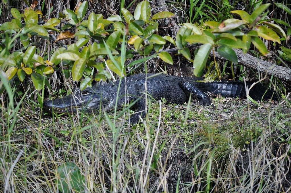 Everglades Safari Park Eco Adventure Tour