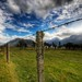 Fencepost in Paradise — Glenorchy