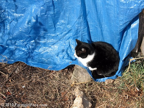 Hard at Work. . .Holding Down the Tarp | by Farmgirl Susan