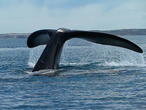 Tail of a whale | by Edith Schreurs