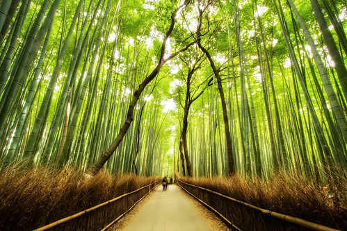 The Bamboo Forest Trail | by arcreyes [-ratamahatta-]