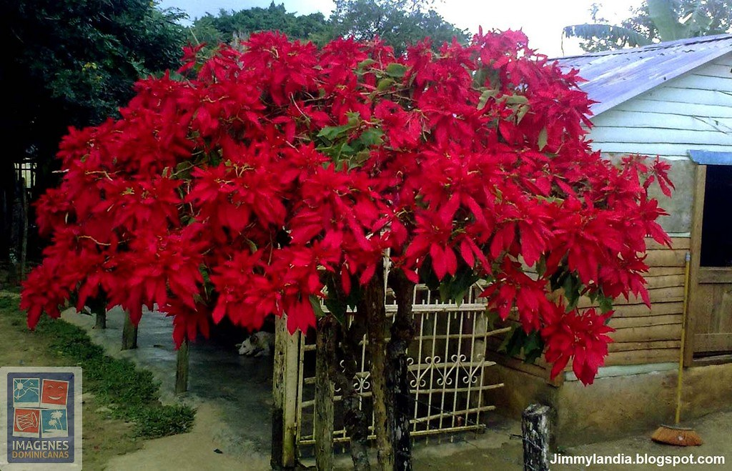 Flores de pascua en casita de campo foto by jimmylandia - Casitas de campo ...