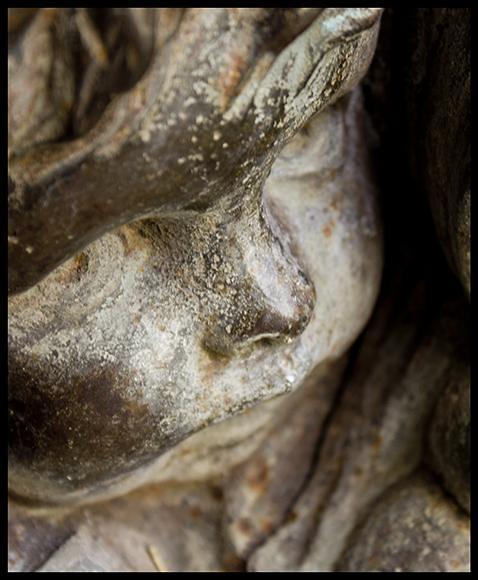D tail d 39 une fontaine jardin des plantes grenoble 8 for Castor grenoble