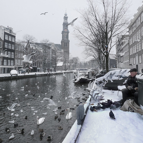 Helping birds survive the Dutch Winter | by B℮n