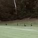 Coatis (ant-eaters)