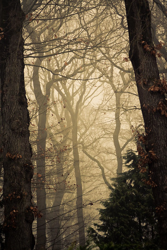 Into the woods | by Alexander Ipfelkofer
