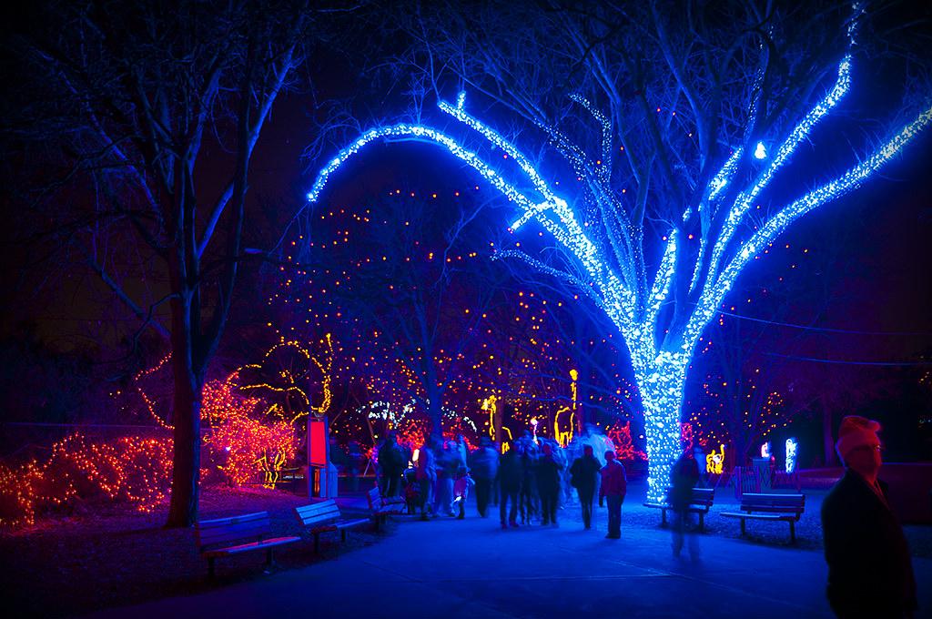 denver zoo christmas lights 2010 dave ingraham flickr. Black Bedroom Furniture Sets. Home Design Ideas
