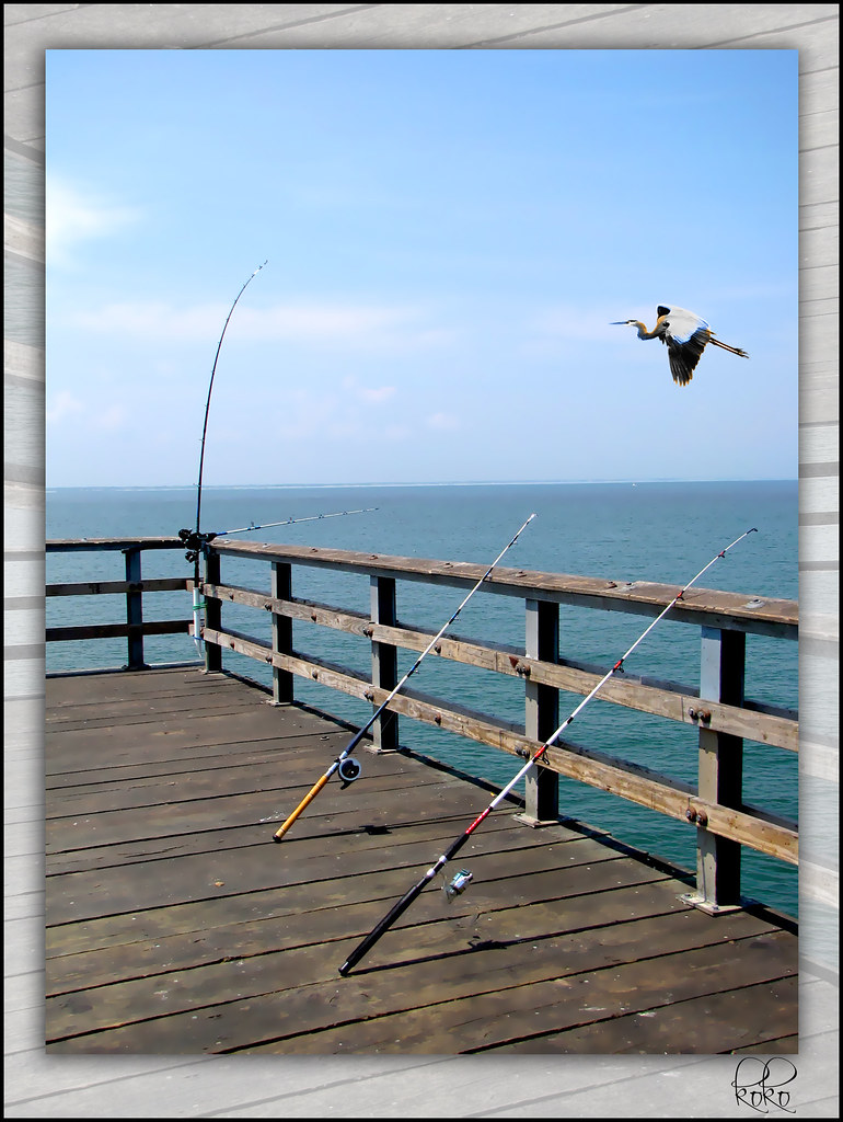 Rods on the chesapeake bay bridge tunnel pier yeah so for Chesapeake bay bridge fishing report