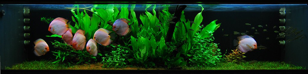 Planted Discus Tank Stephan M 246 Nninghoff Flickr