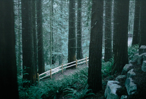 of cedars and picket fences | by This Rules
