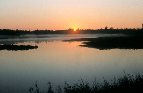 A new day awakens in the marsh