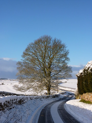 Snow, tree and sky | by Bryn Pinzgauer