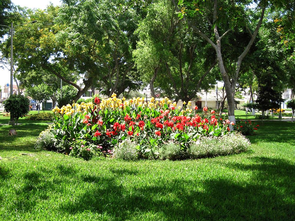 Jardin de california trujillo conjunto de gladiolos en - Como disenar un jardin grande ...