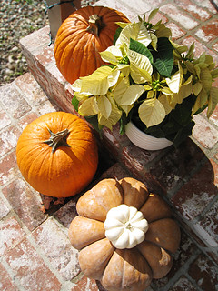 White Poinsettias and pumpkins+outdoor thanksgiving decor | by ...love Maegan